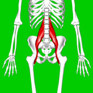 https://en.wikipedia.org/wiki/Psoas_major_muscle