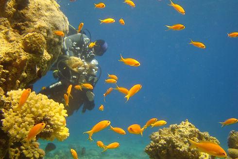 צלילה בים האדום