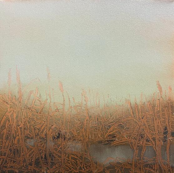 "Cattail i 10x10"" oil on canvas, framed in white wood floater"