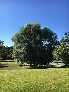 Skogsbad, Göteborg, Botaniska trädgården, Sense in nature
