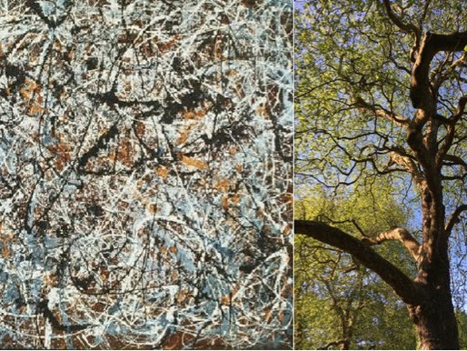 Vad har träden gemensamt med Jackson Pollocks målningar?