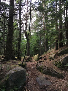 Skogsbad, Göteborg, Änggårdsbergen, Sense in Nature