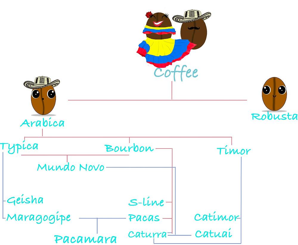 Coffee Varieties, Kafetero