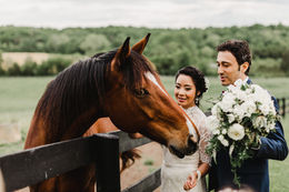 Bride and grooms meet the horses