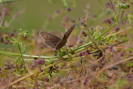 Butterly - wildlife in cornwall Illogan