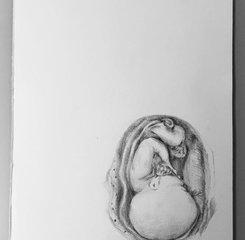 Anatomical Study of Foetus