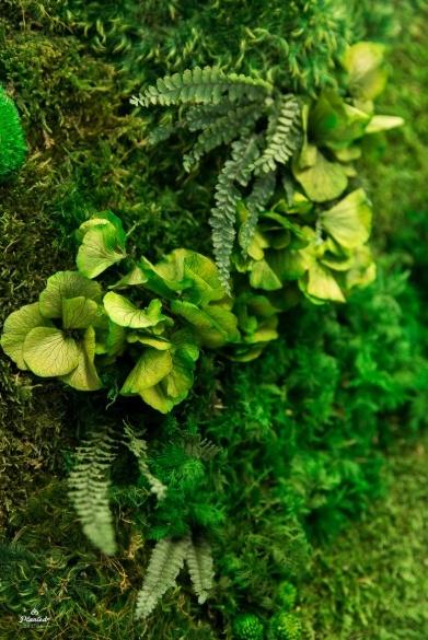 Moss 8