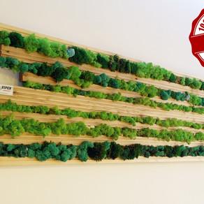 Moss and siberian wood