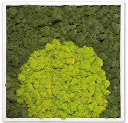 Moss 17