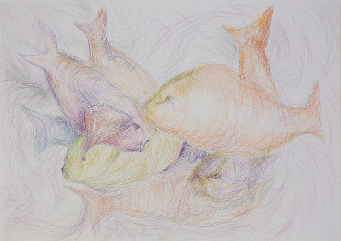 A delicate and energetic coloured pencil drawing of a shoal of fish. They're depicted in a variety of colours and are clustered together,