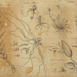 Adnotationes botanicae (1829)