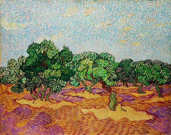Van Gogh's painting of Olive Trees. Orange, magenta and gold fields with green trees against a pale blue and pale golden ochre sky.