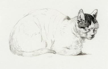 Sketch of a cat (1815) by Jean Bernard (1775-1883).
