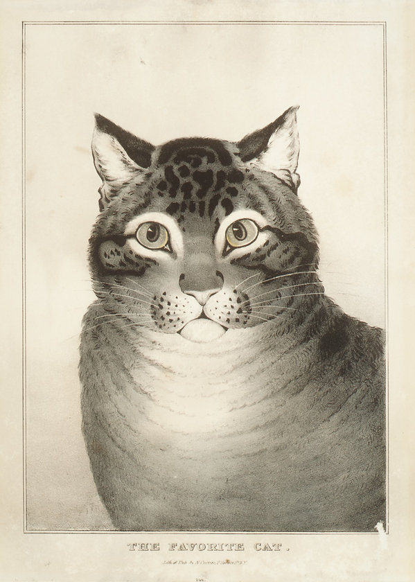 Lithograph of cat in black and white. The cat has dark markings on it forehead and cheeks and is white around it's eyes, mouth and bib. It has small ears and a very round face.
