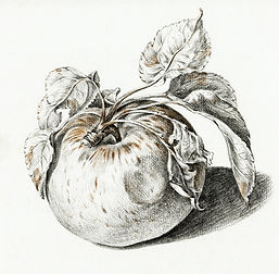Colour pencil study of an apple.