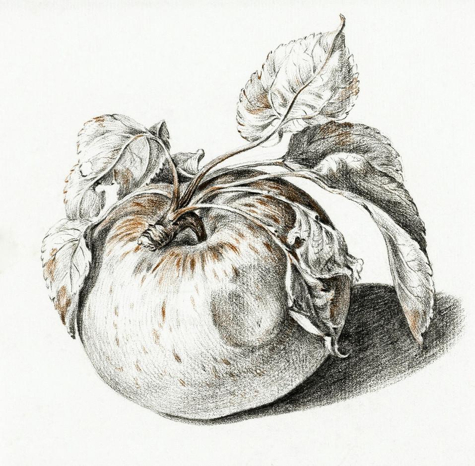 Apple by Jean Bernard (1775-1883) Original from The Rijksmuseum. Digitally enhanced by rawpixel.
