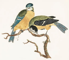 Painting by Johan Teyler of a Blue Tit and a Gree Tit perched on a twisty branch.