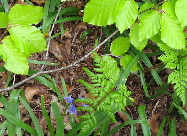 Bright green leaves, ferns and foliage in woodland.
