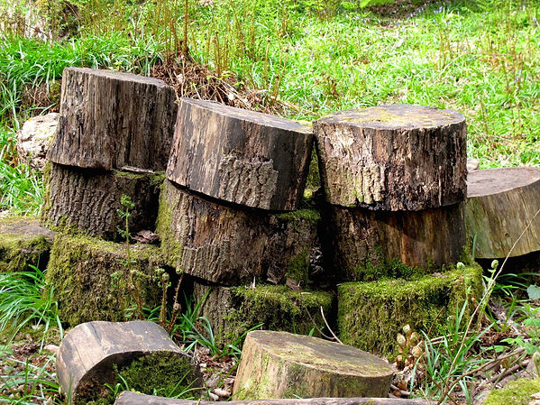 Mossy discs of cut trees stacked on top of each other in woodland.