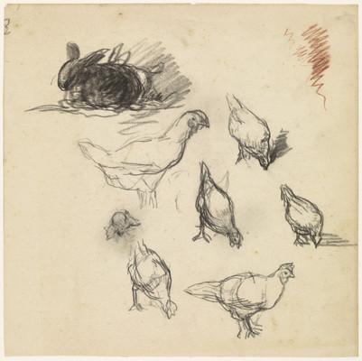 Studieblad met schetsen van kippen en een konijn, Jakob Smits, 1865 - 1928. Material: paper, chalk Measureme nts: h 210 mm × w 210 mm Source: Rijksmuseum, Public Domain