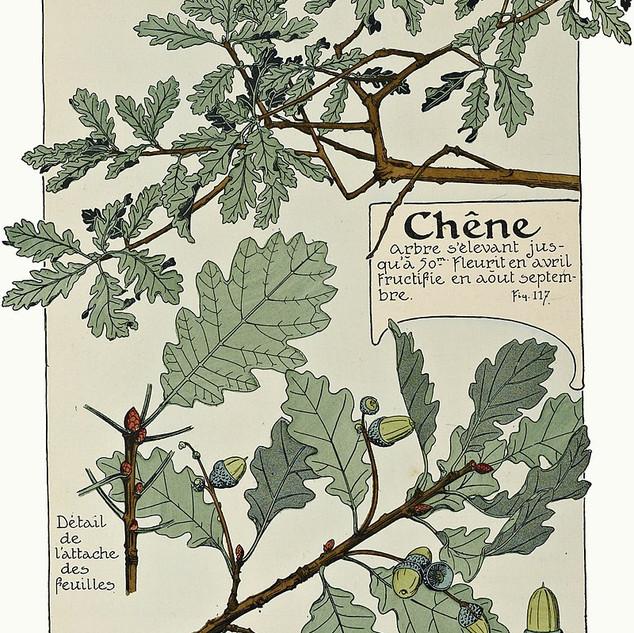 Maurice Pillard Verneuil Oak Tree Study (1903)
