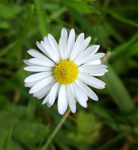 Daisy. Photograph by Rebecca Wilcox