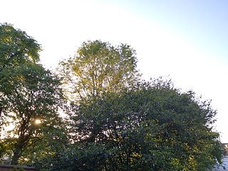 Colour photograph of a low sun shining through trees and a pale blue sky. By Rebecca Wilcox
