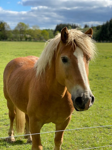 Profile view of Palomino Horse in green field.