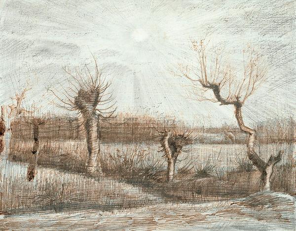 Van Gogh's ink drawing of Pollard Birches in winter.