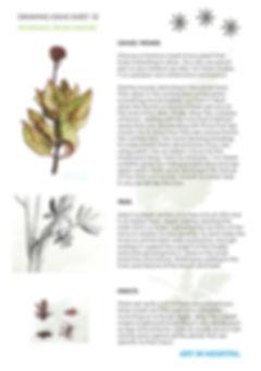 Ideas sheet 12_nature.jpg