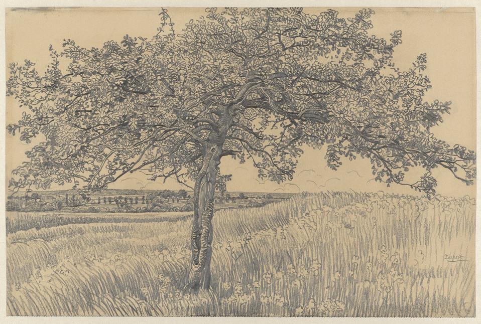 Appelboom in landschap, Pieter Dupont, 1880 - 1911. Material: paper, pencil Measurements: h 317 mm × w 480 mm Source: RijksMuseum, Public Domain