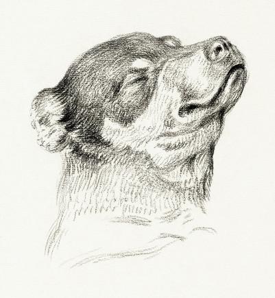 Head of a sleeping dog (1818) by Jean Bernard (1775-1883)