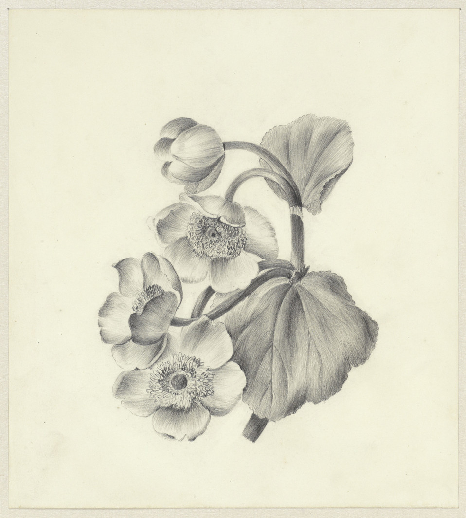 Dotterbloemen, Antoinette Luden, 1837. Measurements: h 200 mm × w 181 mm Source: RijksMuseum, Public Domain