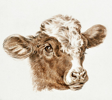 Head of a cow by Jean Bernard (1775-1883). Original from The Rijksmuseum. Digitally enhanced by rawpixel.  public domain CC0 image