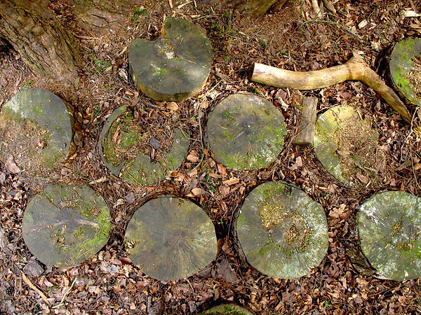 Aerial view of the discs of a tree that has been cut and laid out in rows of four on the ground that is covered in leaves and earth.