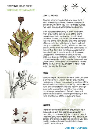 Ideas sheet with written suggestions on drawing from nature such as leaves, trees and insects. Illustrations to go with the text.