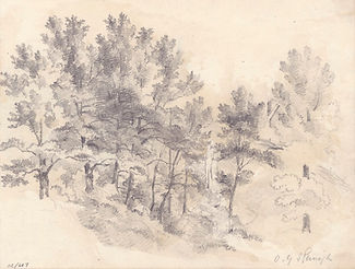 Study of Trees drawn with pencil on cream woven paper