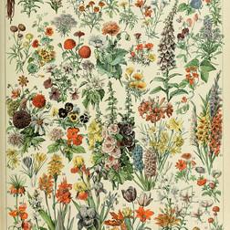 Adolphe Millot - Nouveau Larousse illustré