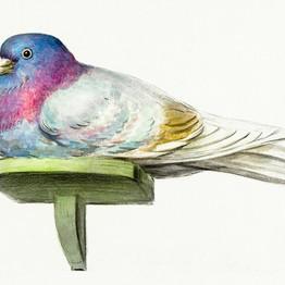 Pigeon sitting on a shelf (1802) by Jean Bernard (1775-1883). Original from The Rijksmuseum. Digitally enhanced by rawpixel.