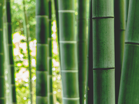 Bamboo Fast Facts