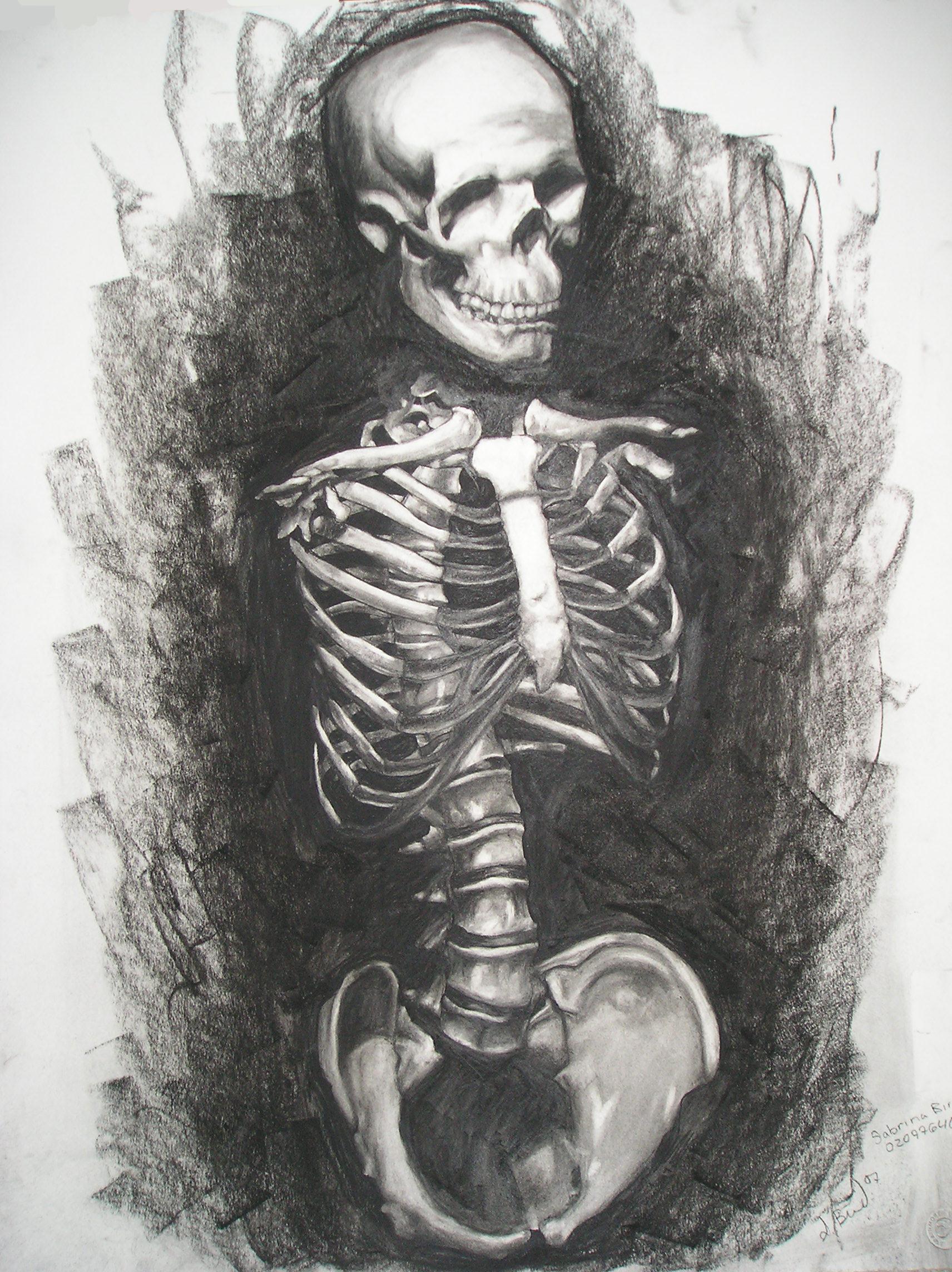 Skeletal Torso Study