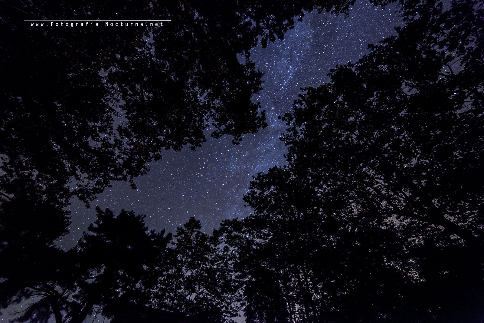 Bosque y estrellas