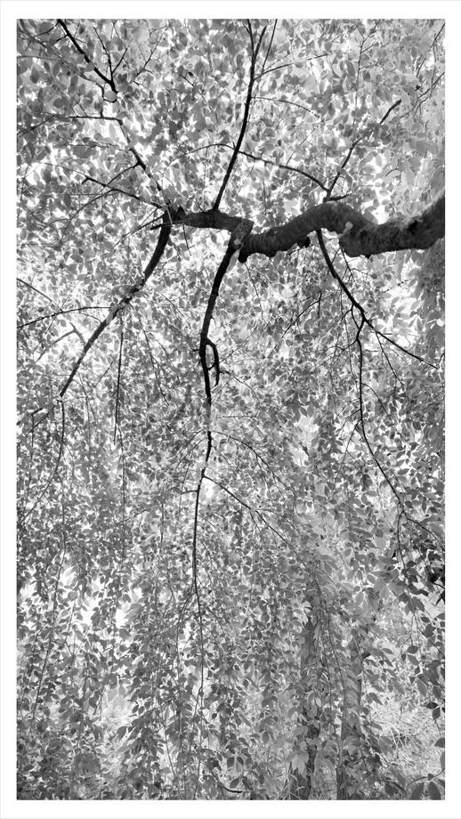 Untitled_Panorama2(149x84cm).jpg