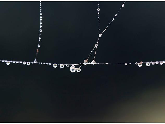 TelaranŞa4 (28x55,4).jpg