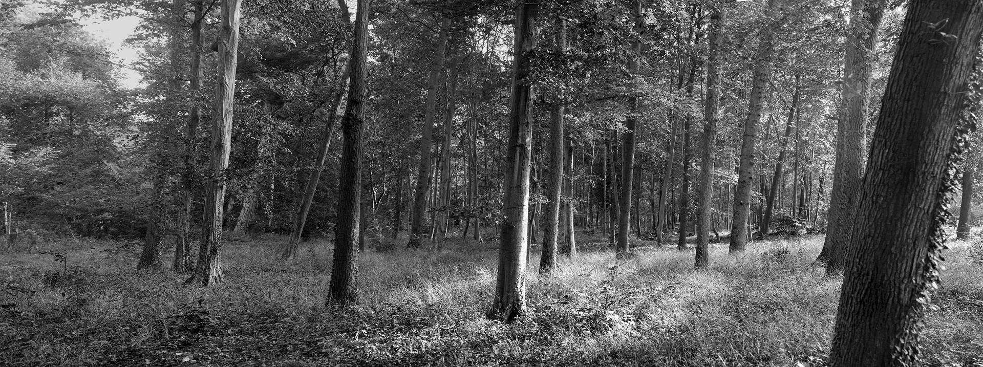 Untitled_Panorama81.jpg
