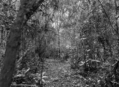 Untitled_Panorama51.jpg