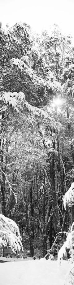 Untitled_Panorama9.jpg