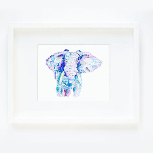 Elephant Color