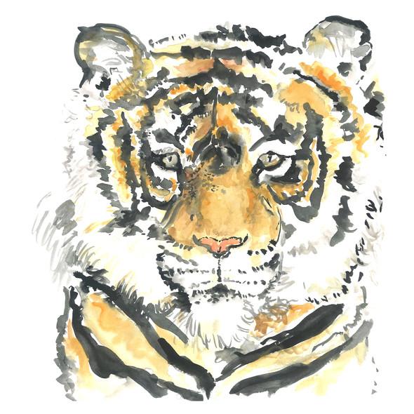 Tiger 8x10.jpg