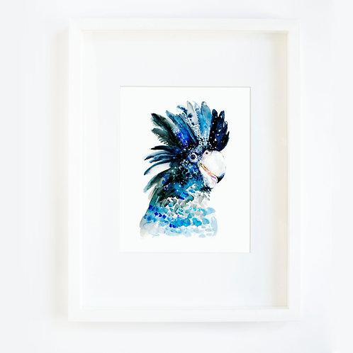 Tropical Blue Bird